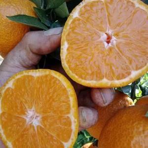 石棉优质黄果甘大量上市中,价格优异欢迎老板的到来