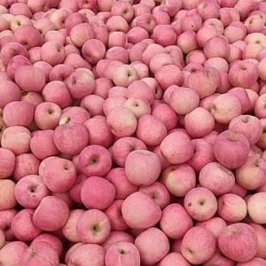 13173448088山东临沂苹果大量批发中,红富士苹果...