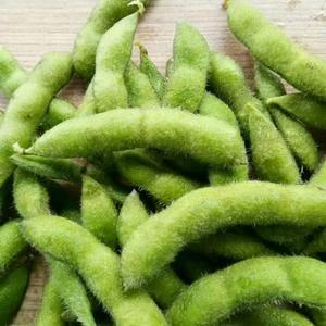 本地毛豆大量上市产地直发一手货源