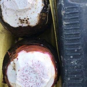 大量供应香芋,福建芋头,长汀芋头,18559728098