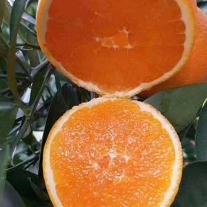 伦晚脐橙 秭归伦晚 夏橙 秭归夏橙 个大味甜 纯甜多汁 ...