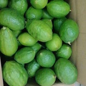 自家果场种植的正宗广东香水柠檬无籽,四季结果,薄皮苦瓜皮...