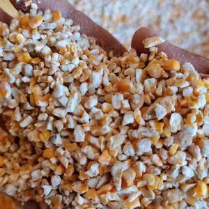 常年供应碎玉米,熟玉米,碎小麦,大豆胚芽粉,豆皮小料,开...