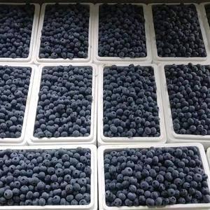 丹东蓝莓便宜啦!本人常年代收蓝莓,经验丰富,欢迎新老客户...