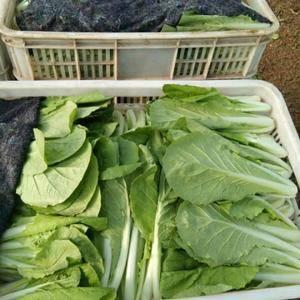 我们是山东万亩蔬菜基地的,蔬菜大棚约9000多个,主要供...