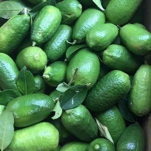 果园青柠檬占地面积2000余亩,子弹头青柠檬香水正在大量...