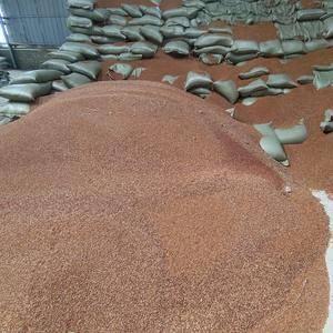 东北红高粱-4000吨,仁怀在库,电话:13208510...