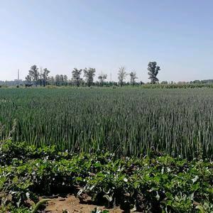 榆社箕城镇北马会村委员会出售2021年10份新产百亩旱地...